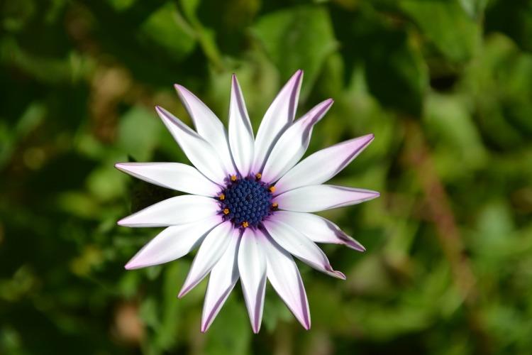 flower-1230138_1920