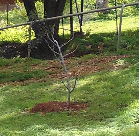 Haiku tree