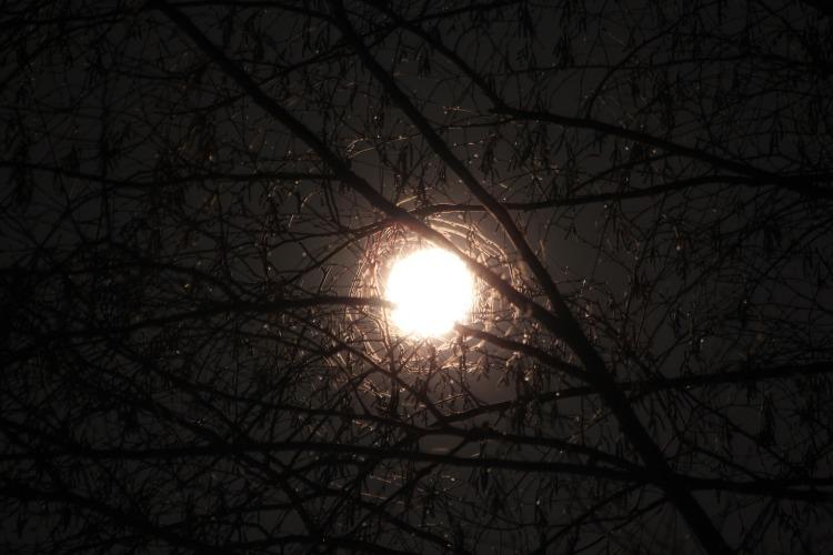 moon-through-branches-1170832_1920
