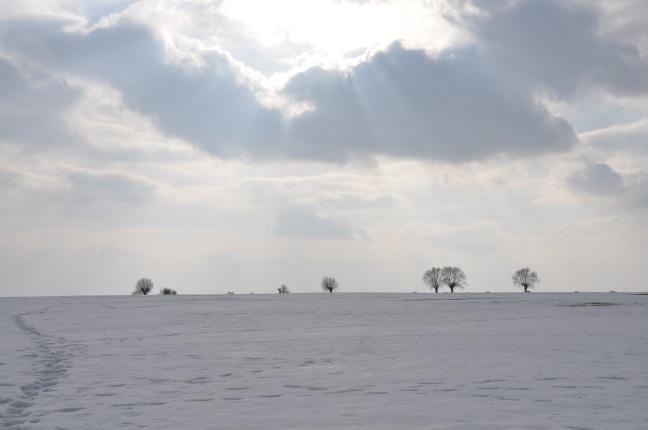 winter-645977