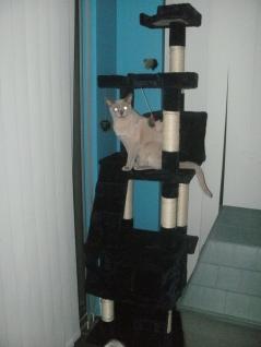 New Cat tree + evil Orion