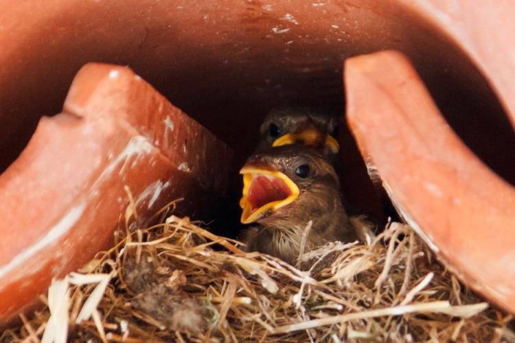 sparrow-18215