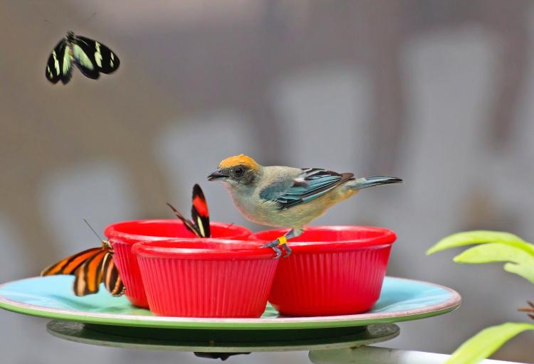 butterflies-and-bird_g14z_wyu