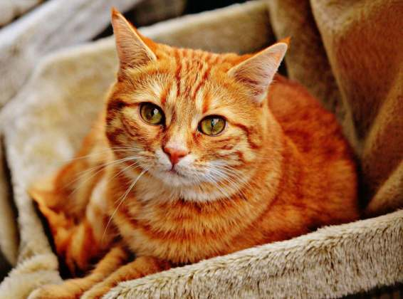 cat-1046544_1920pixabay