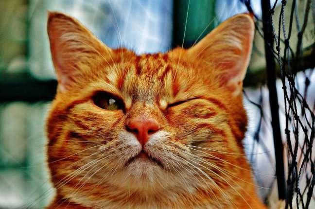 cat-1333926_1920pixabay