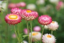 flowers-398941_1920