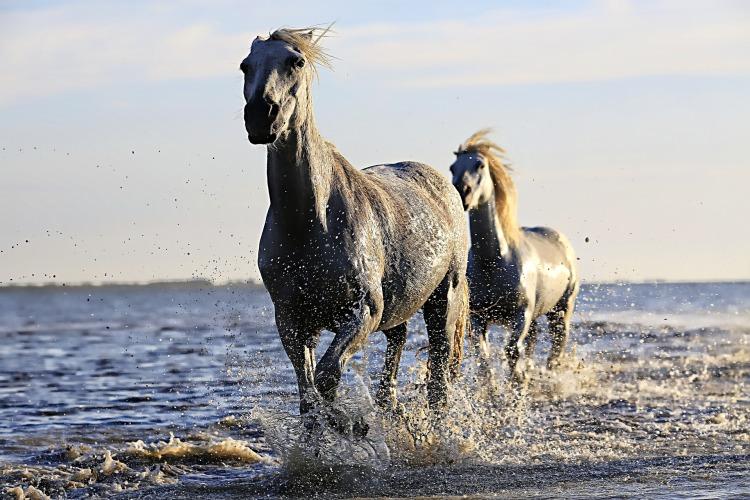 horse-1542480_1920.jpg