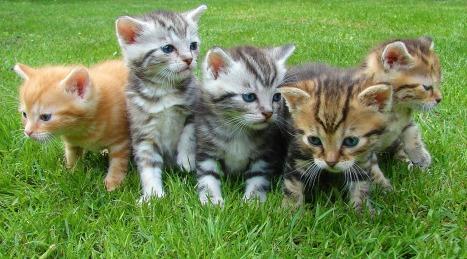 kittens-555822_1280