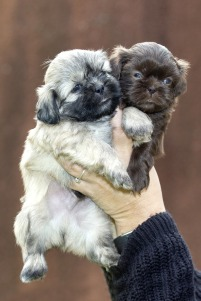 puppy-1522527_1920
