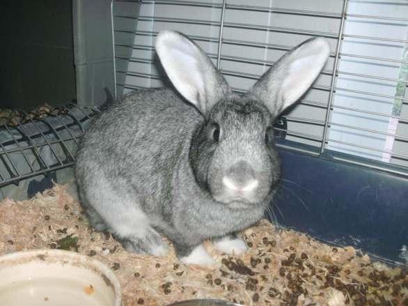 rabbit-2016-10-19-010