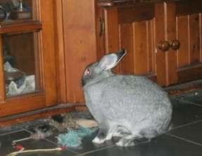 rabbit-2016-10-19-013