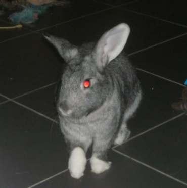 rabbit-2016-10-19-015