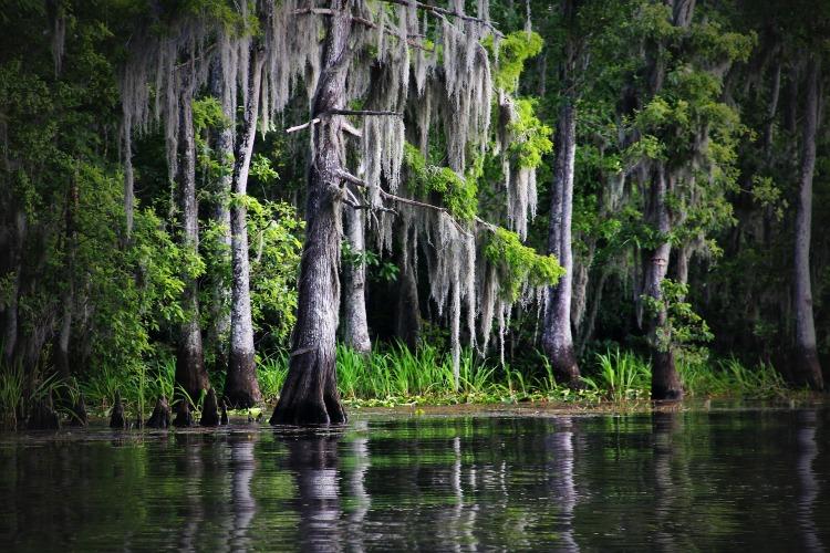 swamp-169168_1920