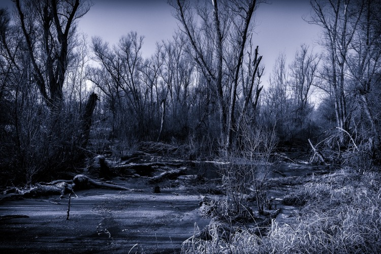 swamp-2016512_1920