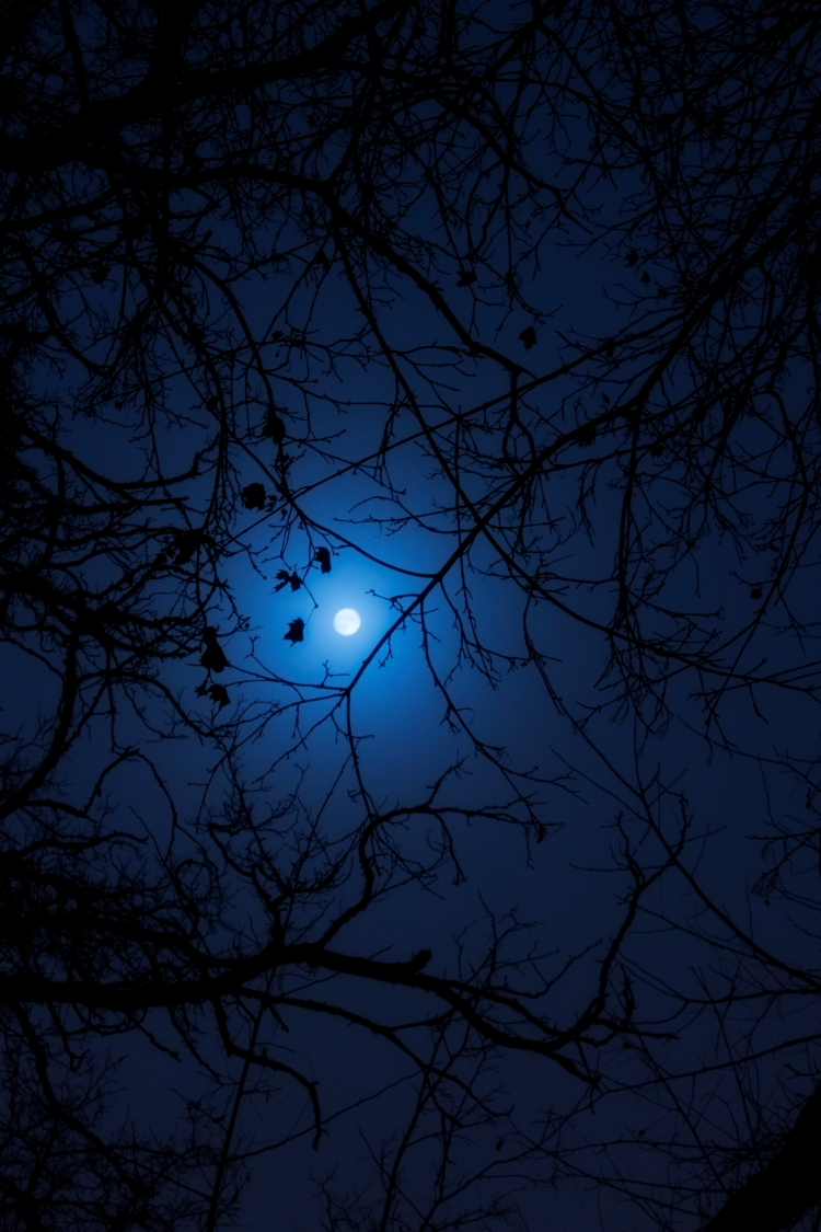 tree-branches-at-moon-night_fytavyfd