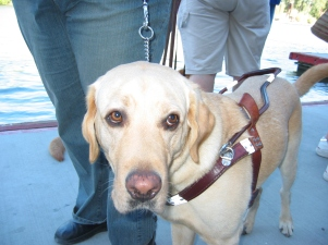 guide-dogs-1485725