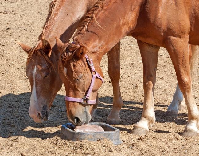 horses-sharing-vitamins_z1P1WvOO