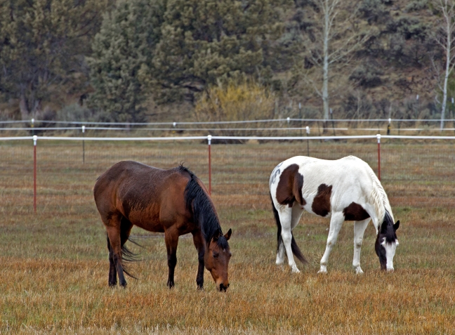 horses_zkXw9wtd