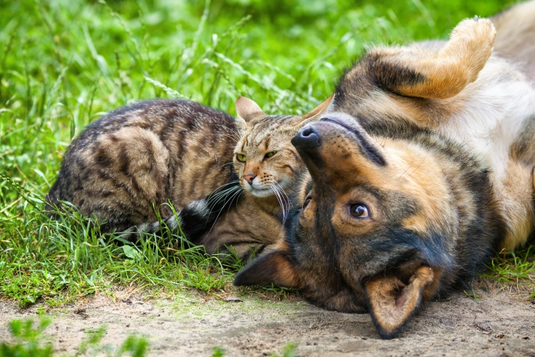 Dog and cat best friends playing together outdoor. Lying on the