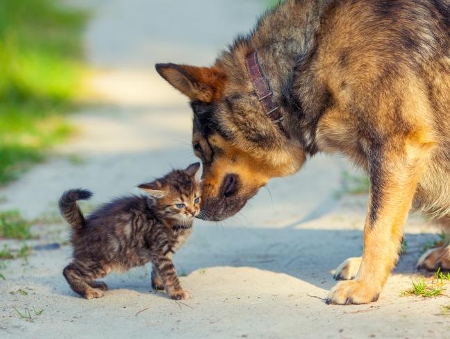 Little kitten and big dog