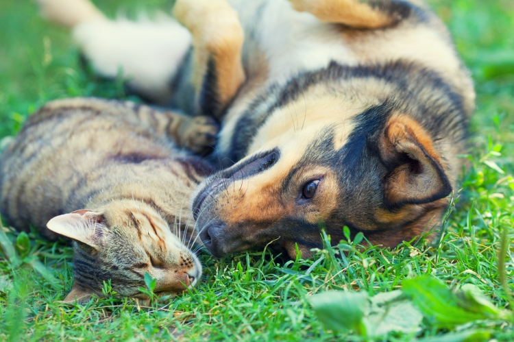 Dog and cat lying together on the grass