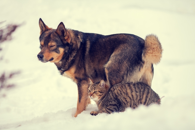 Cat and dog best friends outdoors in the snow