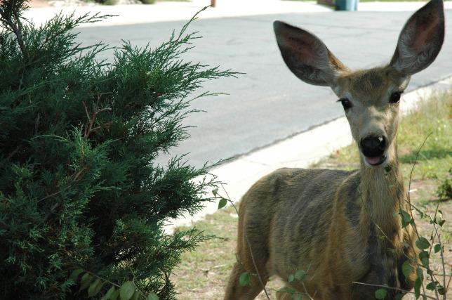deer-942012_1920