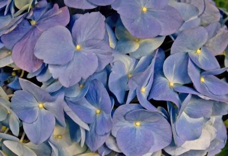 wildflowers_fks24vKu