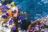 abstract-underwater_MkRGkvtu