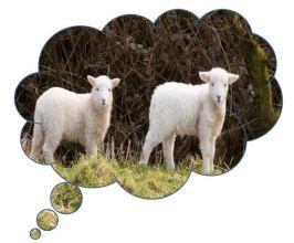 Dream Flock 3