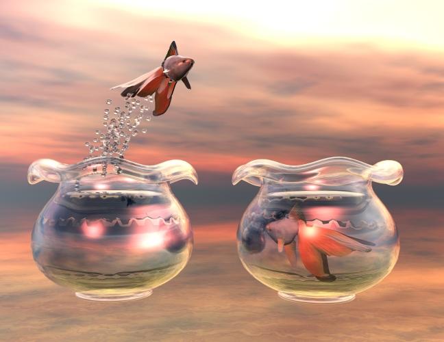 fish_MJ2C6H9u.jpg