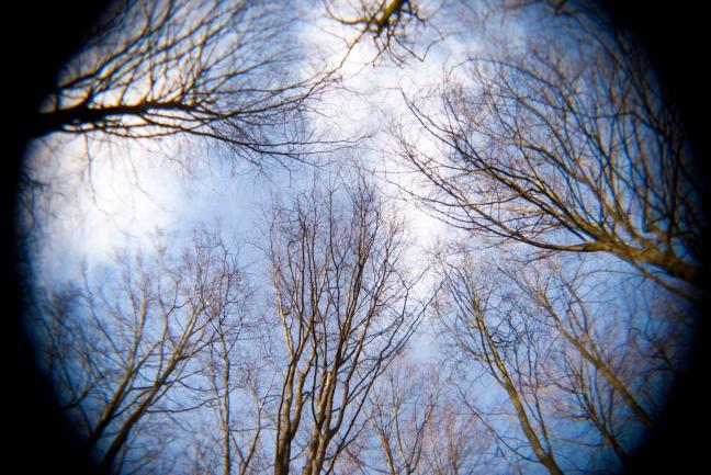 trees_zy2OU8q_.jpg