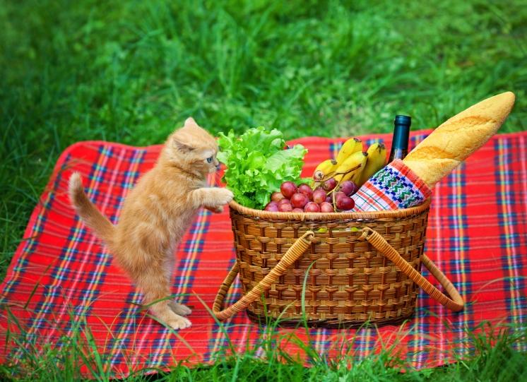 Kitten climbs in a picnic basket