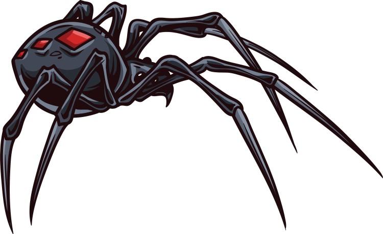 vector-spider_MJORYsLd_L