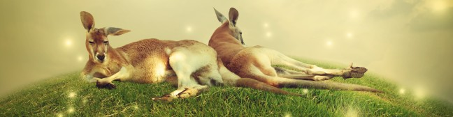 graphicstock-two-kangaroos-in-a-fantasy-hilltop-landscape-with-butterflies_rZqx5nr0lOZ