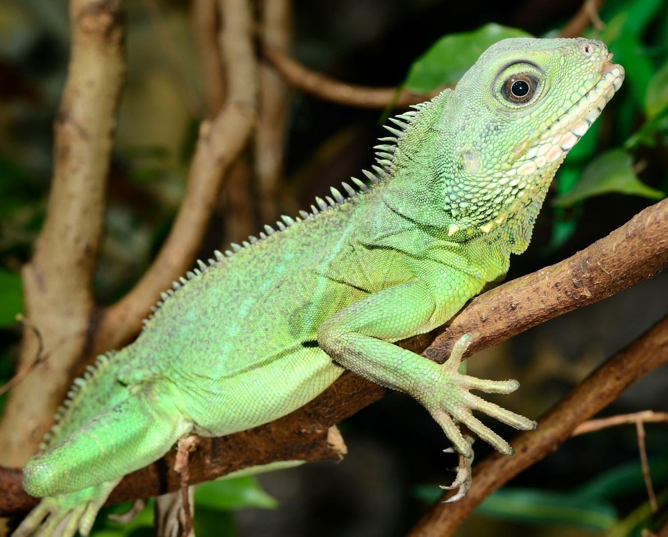 AS-03282016-reptiles-DSC_1682