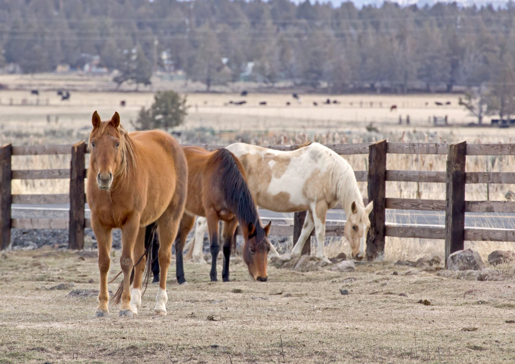 horses_zkgNPPF_