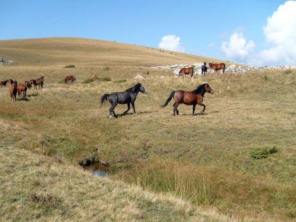 wild-horses_M1H1cvwd